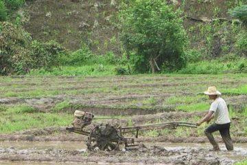 Petani menanam investasi, semua dihitung dengan kurs jual-beli