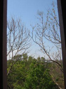 Pohon meranggas di musim kemarau